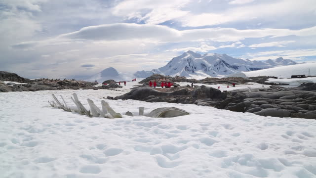 Antarctic peninsula, Port Lockroy, Jougla point - a whale skeleton and tourists from a distance in a panoramic view of the research station