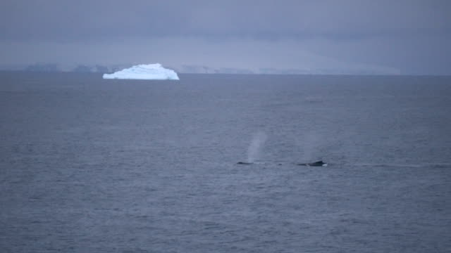 antarctic whale and ice floes - antarctica whale stock videos & royalty-free footage