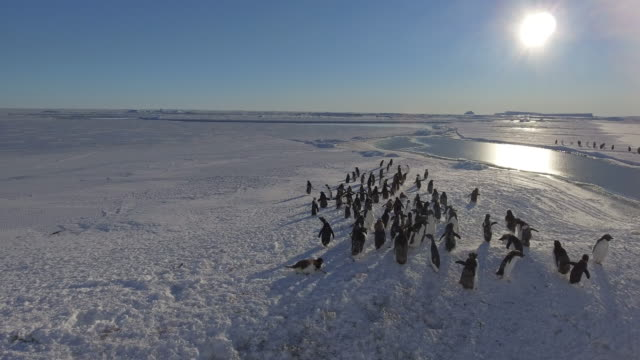 antarctica close up aerial view next to a big ice berg on the sea ice of adelie penguin chicks that gather in the safety of a large group of other... - antarctica sunset stock videos & royalty-free footage