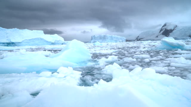 antarctica- floating ice - ice floe stock videos & royalty-free footage