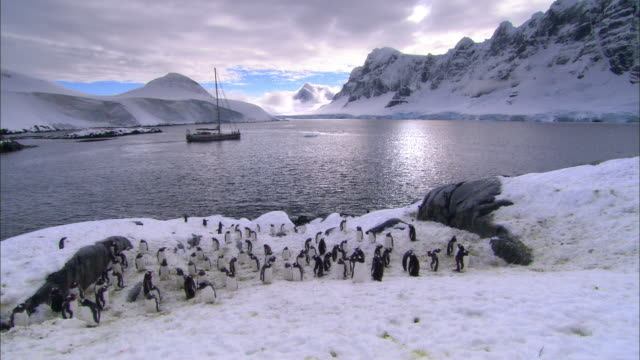 ms, ha, antarctica, gentoo penguins on snowy sea shore, yacht in background - gentoo penguin stock videos and b-roll footage