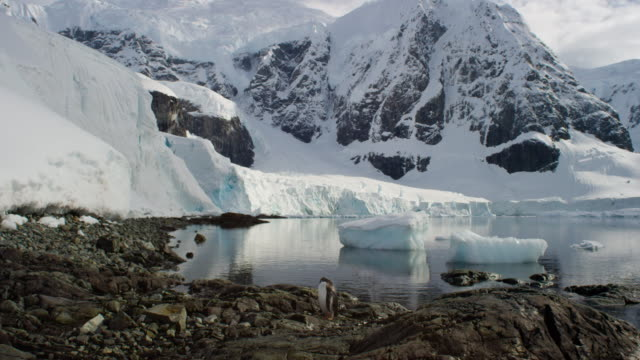 antarctica, glaciers and mountains - clima video stock e b–roll