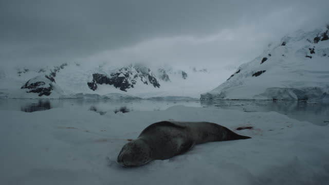 antarctica, glaciers and mountains - seal animal stock videos and b-roll footage