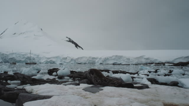 Antarctica, Glaciers, Penguins