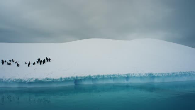 Antarctica, Group of Penguins Walking