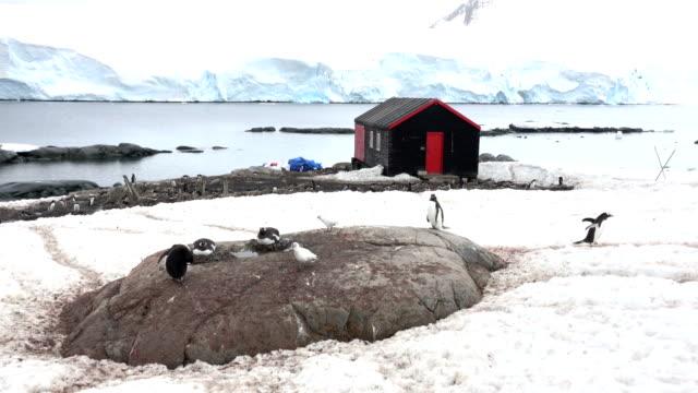 vidéos et rushes de station de port lockroy antarctique montagne glaciers nidification colonie de pingouins de gentoo - oiseau qui ne vole pas