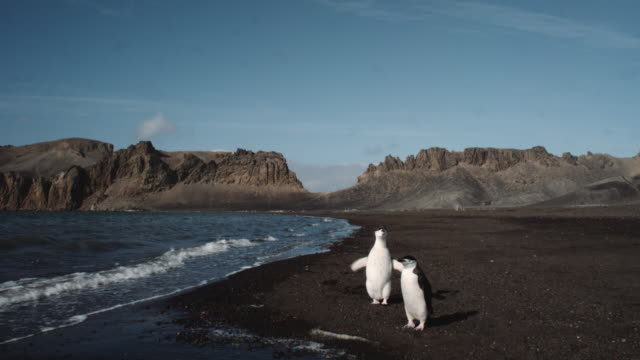 antarctica, mountains, penguins - two animals stock videos and b-roll footage