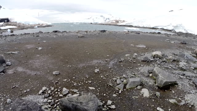 antarctica nature - glacier stock videos & royalty-free footage