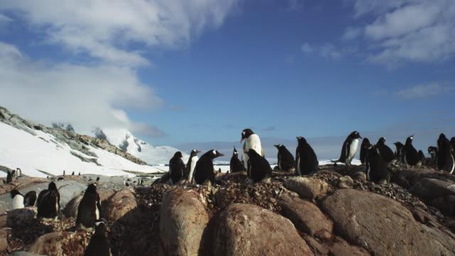 antarctica, penguins - antarctica video stock e b–roll