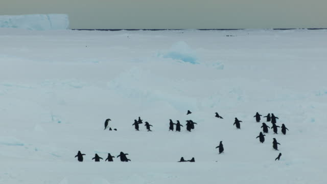 antarctica: penguins walking over ice floe - ice floe stock videos & royalty-free footage