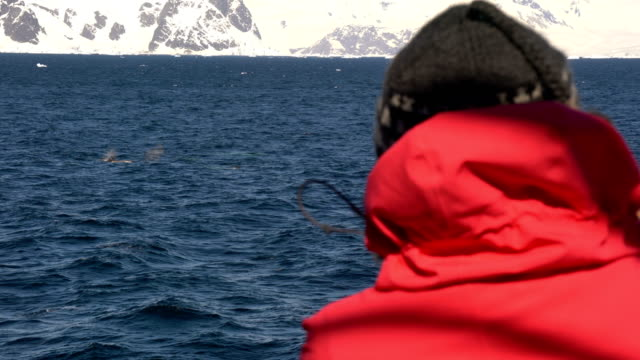 antarctica tour to watch whales - whale watching stock videos & royalty-free footage