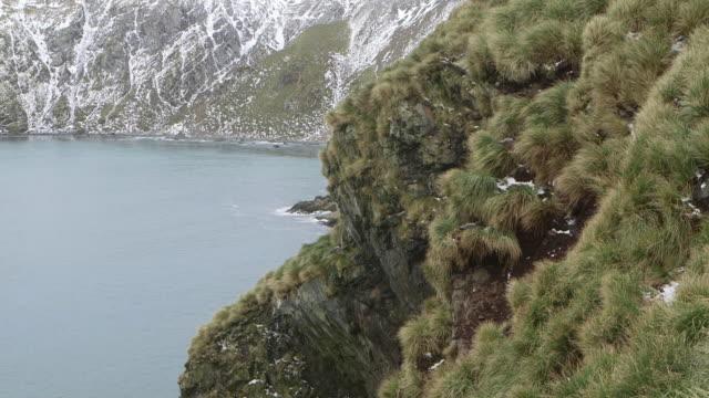antarctica/south georgia - antarctic ocean stock videos & royalty-free footage