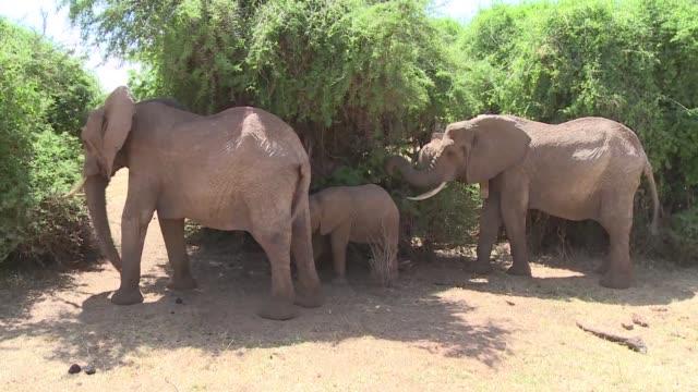 Ante el recrudecimiento de las masacres de elefantes y rinocerontes la toma de conciencia comienza a ganar terreno