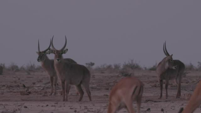 antelope / africa - 有名原生地域点の映像素材/bロール