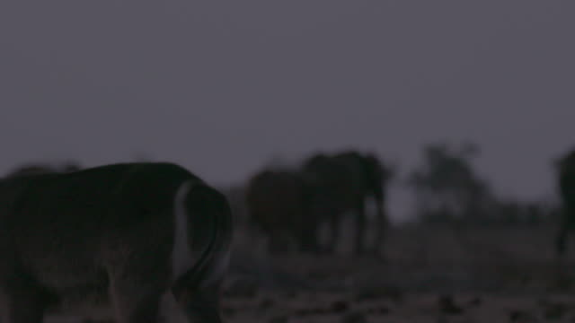antelope and herd of elephants / africa - 有名原生地域点の映像素材/bロール