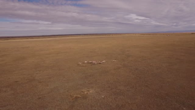 antelope behind to side chase aerial, stock video sale - drone discoveries llc drone aerial view - 野牛点の映像素材/bロール