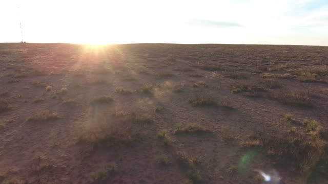 stockvideo's en b-roll-footage met antelope lens and sun flare tracking - drone action 4k wildlife open plain antelope on a prairie, lens flare, sun flare, tracking, following grassland action adventure, dramatic 4k nature/wildlife/weather drone aerial video - kleine groep dieren