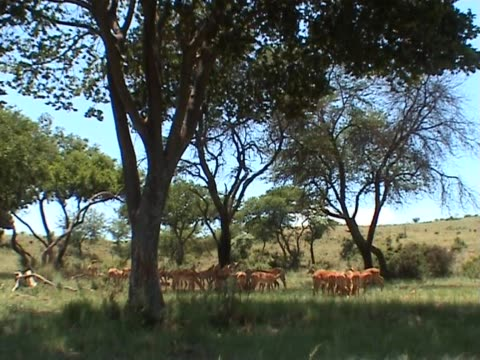 pal: antelopes in the wilderness - named wilderness area stock videos & royalty-free footage