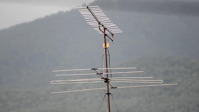 antenna - antenna parte del corpo animale video stock e b–roll
