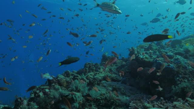 anthias fish, coral reef, komodo, indonesia (4k) - soft coral stock videos & royalty-free footage