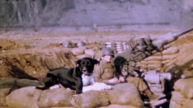 anti-aircraft 40mm sandbagged gun emplacement, gunner's dog on sandbag revetment, and u.s. army gunner with dog and cigar / germany - anti aircraft stock videos & royalty-free footage