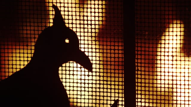 antique fire screen and fire close. - animal representation stock videos & royalty-free footage