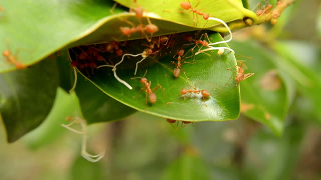 vídeos de stock e filmes b-roll de formigas no trabalho - parte do corpo animal