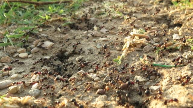 vidéos et rushes de ants at work - colony