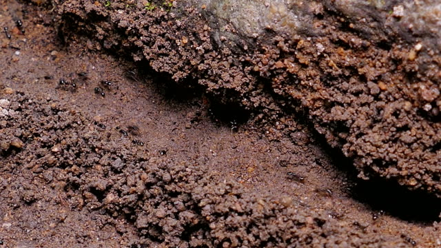 ants carrying egg and food into ant's nest. - army stock videos & royalty-free footage