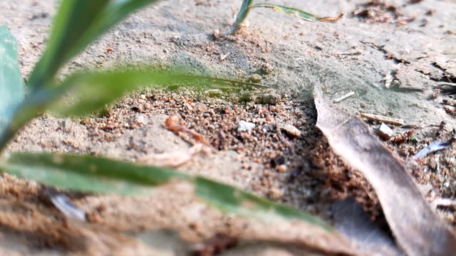 ants crawl on the ground - foraging stock videos & royalty-free footage
