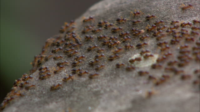 ecu, selective focus, ants crawling on rocks, china, hong kong - ant stock videos and b-roll footage