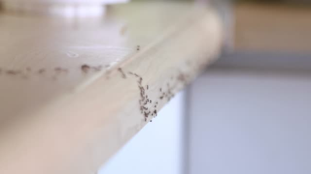 ants crawling - insect stock videos & royalty-free footage