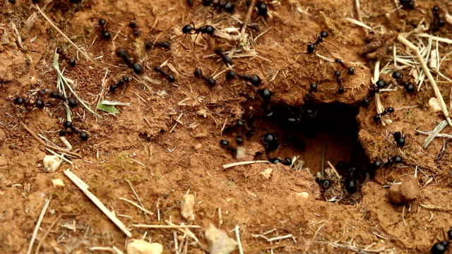 Ants entering ground cave