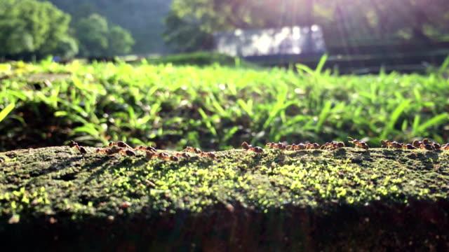 ameisen in einem garten - ameisen stock-videos und b-roll-filmmaterial