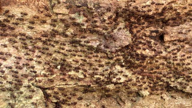stockvideo's en b-roll-footage met mieren in een tuin - mier