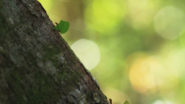 ants in a line carrying leaves - ameise stock-videos und b-roll-filmmaterial