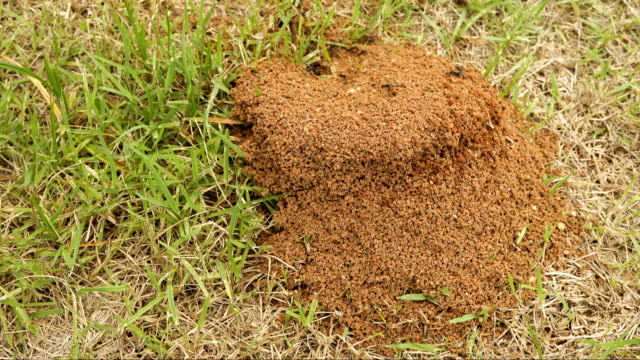 ants nest time lapse - ant stock videos and b-roll footage
