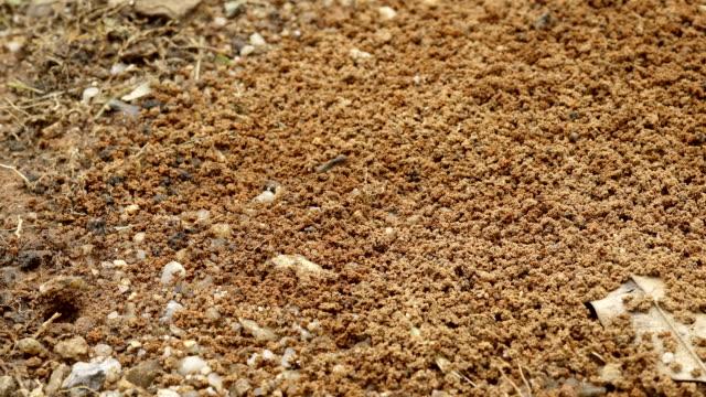 myror boet tidsfördröjning - skadedjur bildbanksvideor och videomaterial från bakom kulisserna