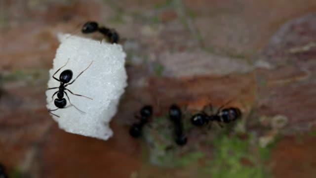 Ants on a dead tree.