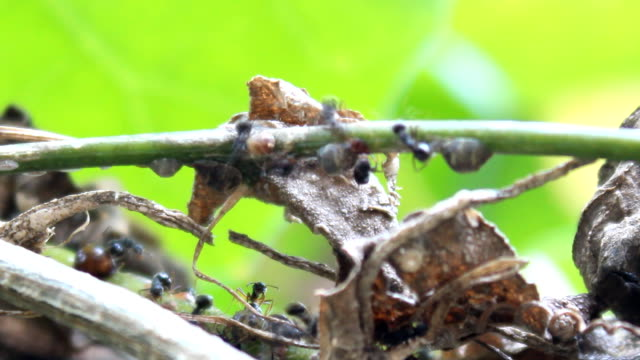 ants on the branches - ecuador stock videos & royalty-free footage