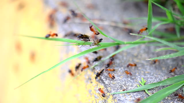 ants on work - animal wing stock videos & royalty-free footage