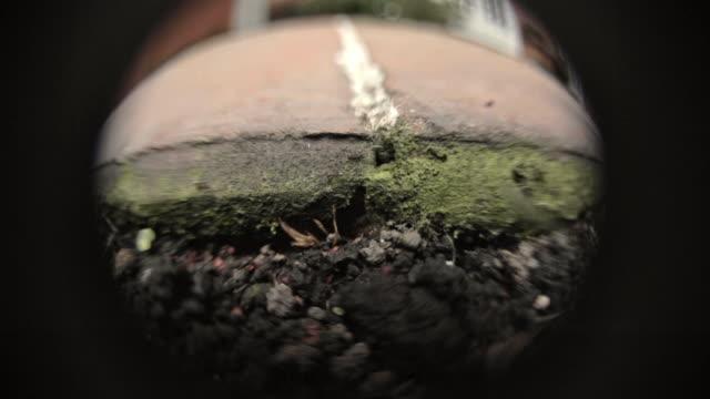 ants passing by close up image - 虫除け点の映像素材/bロール