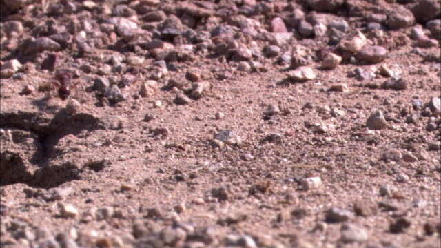 ants scurry across a desert. - gravel stock videos & royalty-free footage