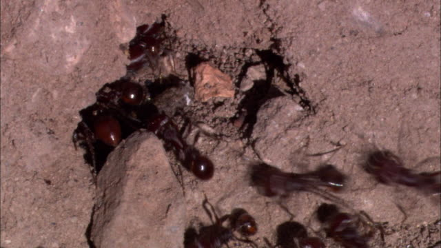 ants scurry in a hole. - ant stock videos & royalty-free footage