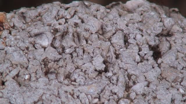 vídeos de stock e filmes b-roll de formigas - invertebrado