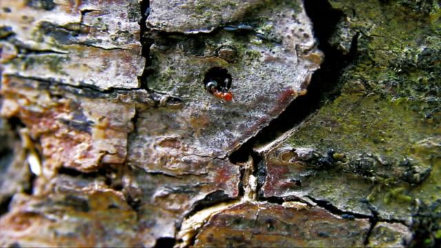 HD: Ants
