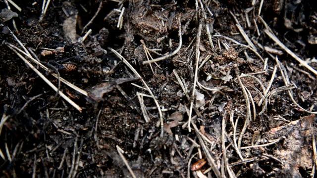 myror - djurbeteende bildbanksvideor och videomaterial från bakom kulisserna