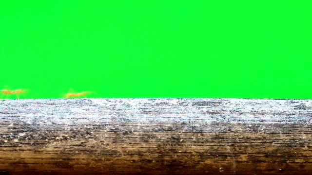 ants walk on the twig floor with green screen - ant stock videos & royalty-free footage