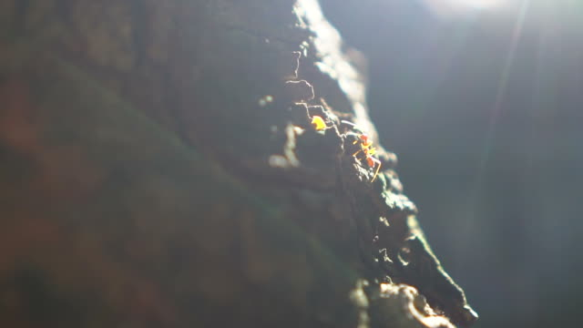 Ants walking at sunset