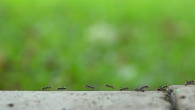 hd ants walking on the ground with green blurred background slow motion - limb body part stock videos & royalty-free footage